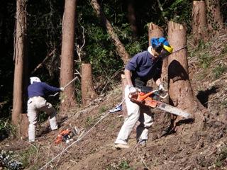 テイケイ健生園にて杉伐採のお手伝い